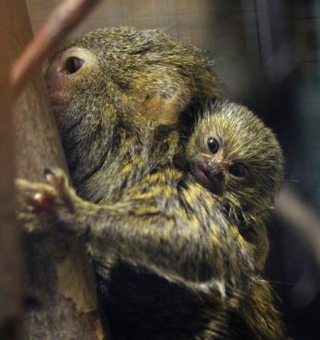 Zoo Liberec - kam s dětmi